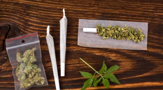 Marihuana Teil 2: Wirkungen und Risiken von Cannabis